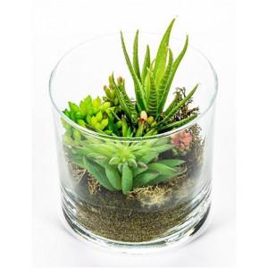 Suculenta con Aloe Ref. Z-1212/15-A